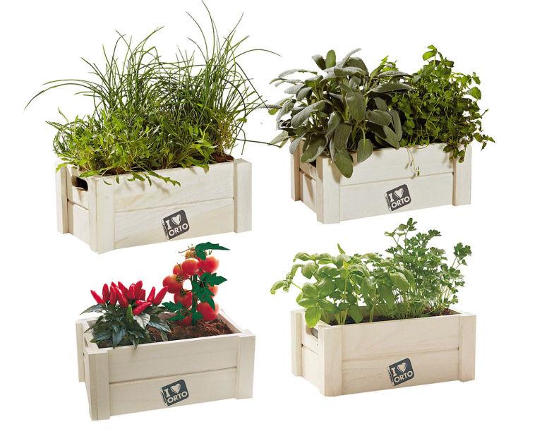 Elegant with come arredare una terrazza con piante for Arredare un terrazzo con piante e fiori