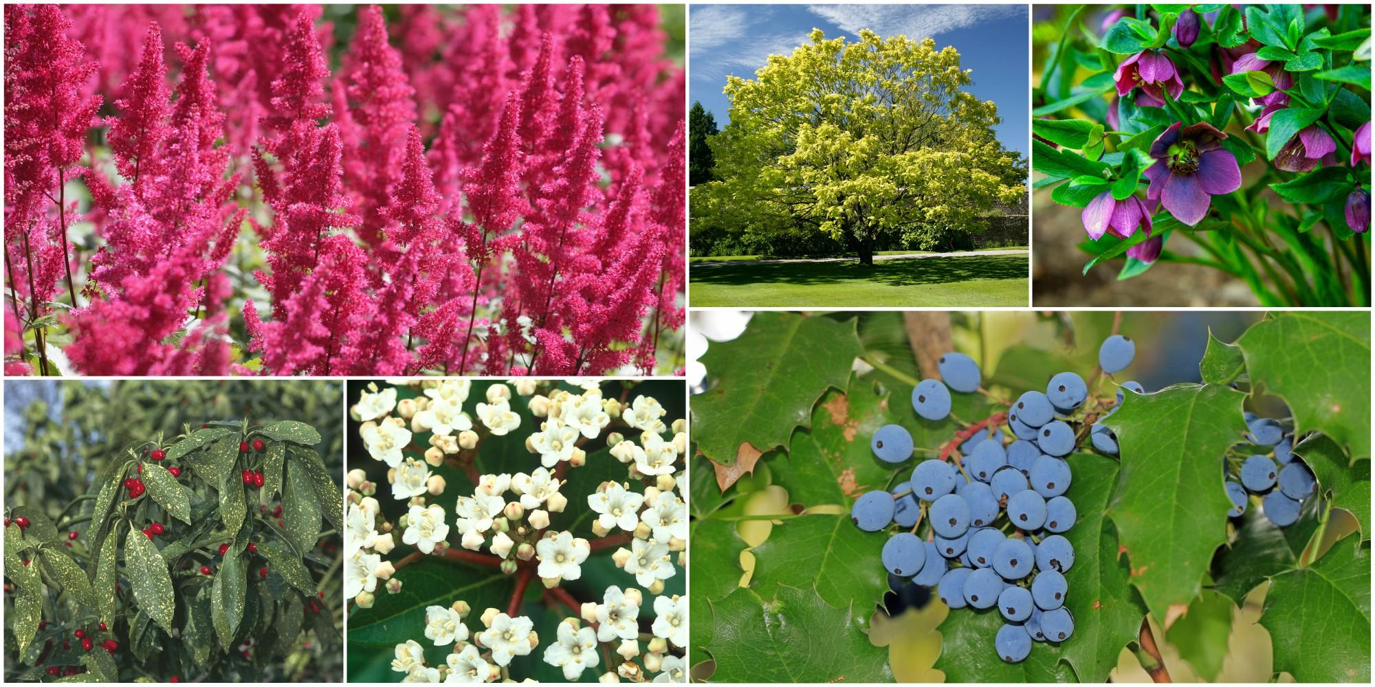 10 piante da esterno e tipi di fiori resistenti al freddo - Idee piante da giardino ...