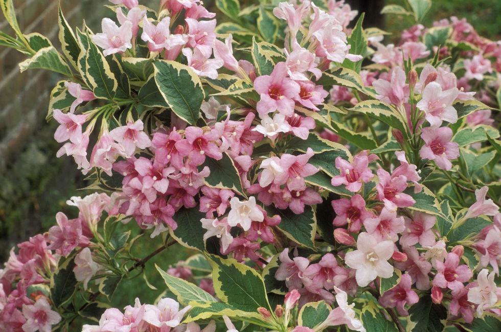 10 piante da esterno e tipi di fiori resistenti al freddo e al sole