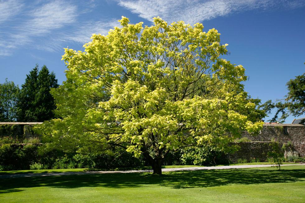 Piante da esterno sempreverdi resistenti al freddo free for Cespugli fioriti perenni resistenti al freddo