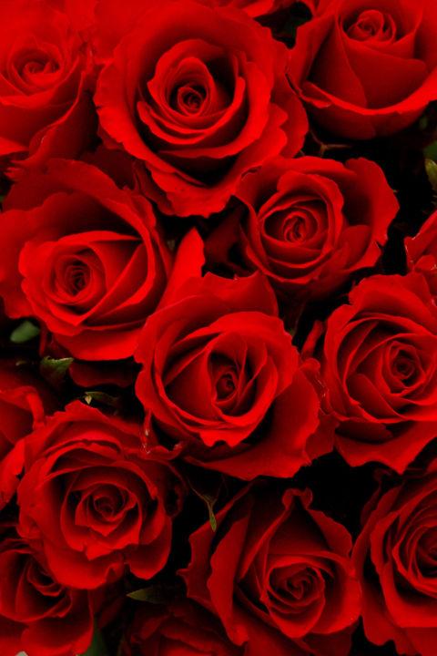 Linguaggio dei fiori scopri il significato dei colori - Images of red roses hd ...