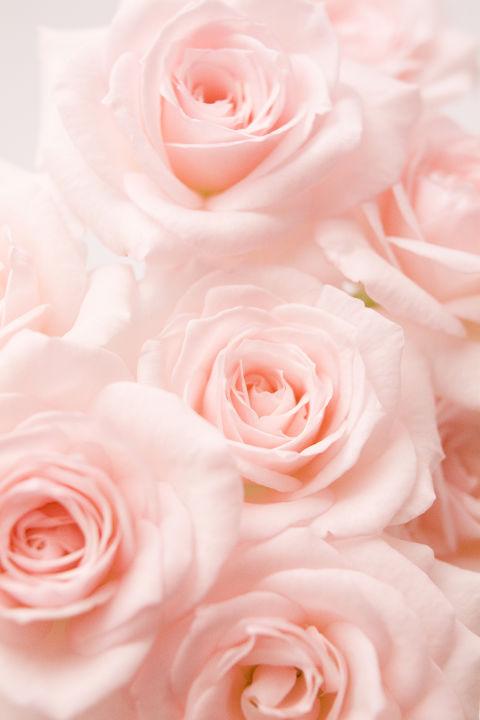 Popolare Linguaggio dei fiori: scopri il significato dei colori delle rose SW61